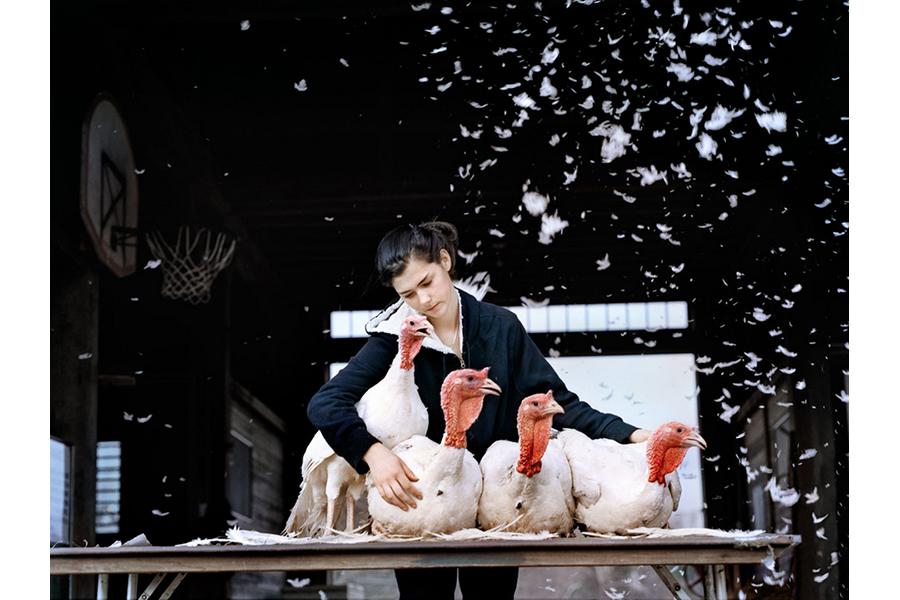 Sienna, Turkey Madonna, Shutesbury, MA by Holly Lynton