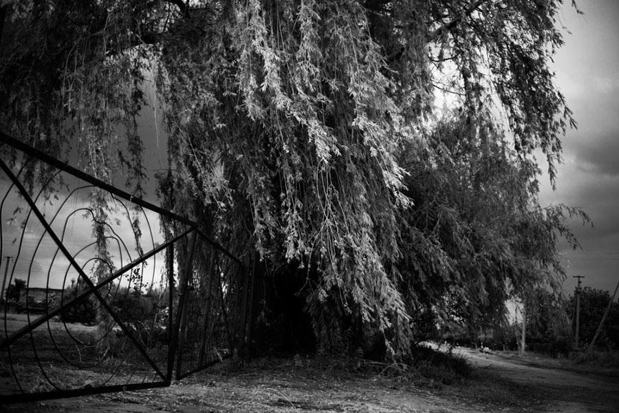 A Mennonite massacre site near Zaporozhye, Ukraine (2012) by Ian Willms