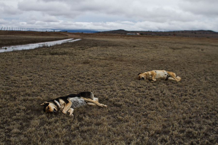 Dead dogs at Cayeyo´s ranch, La Ley del Monte (2012) by Mauricio Palos