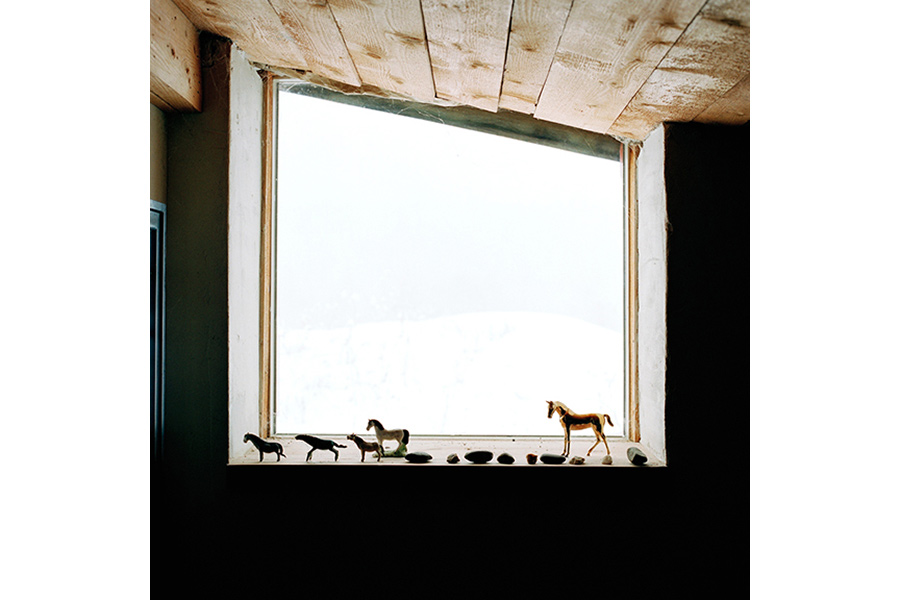 Mom's Horses, Vermont, 2006 by Thad Russell