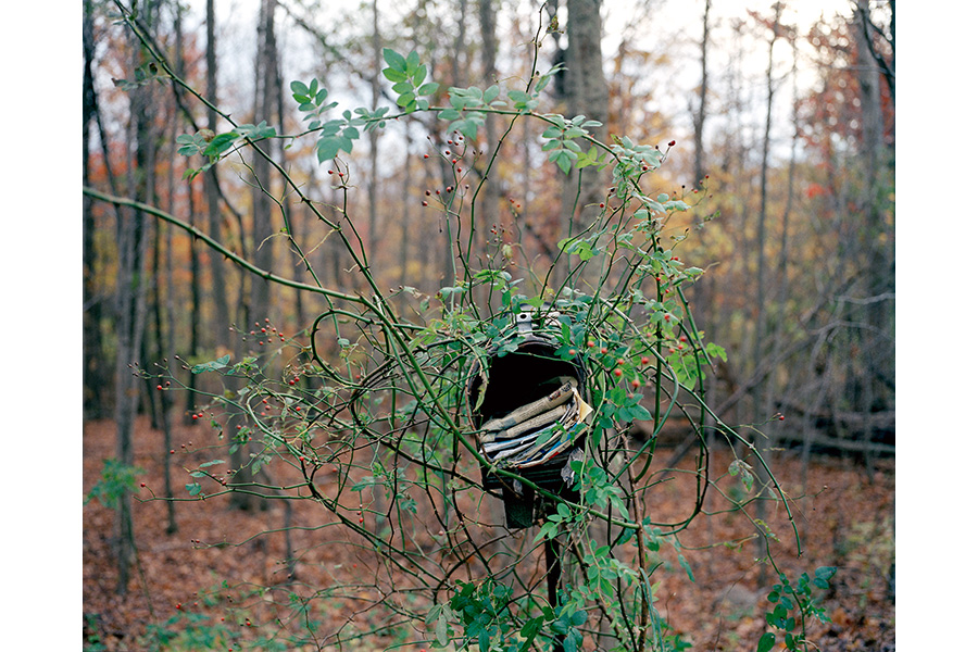 Mailbox with Rosehips, Bethany, CT, 2006 by Lisa Kereszi
